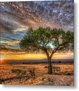 Tree At Sunset Metal Print by William Wetmore