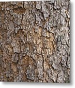 Tree Bark Background Texture Metal Print