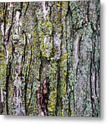Tree Bark Detail Study Metal Print by Design Turnpike