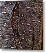 Tree Bark To The Left Metal Print
