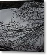 Tree Buds Metal Print