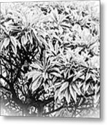 Tree Bush Vignette Metal Print