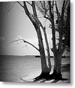 Tree By The Sea Metal Print