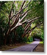 Tree Canopy Metal Print