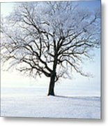 Tree Covered In Hoar Frost Metal Print