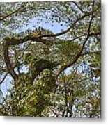 Tree Dancer Metal Print