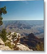 Tree Edge Metal Print