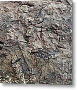 Tree Em Metal Print