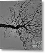 Tree Fall Metal Print