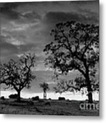 Tree Family In Black And White Metal Print