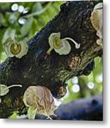 Tree Flowers Metal Print