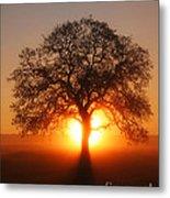 Tree Fog Sunrise Metal Print
