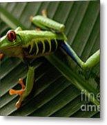 Tree Frog 16 Metal Print