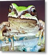 Tree Frog Metal Print by Jean Noren