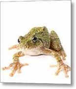 Tree Frog Ready To Jump Metal Print