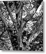 Tree Giant Metal Print