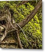 Tree Grows From Rock Outcrop Metal Print