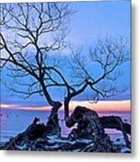Tree Hanging Over Lake - Photographers Collection Metal Print