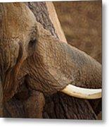 Tree Hugging Elephant Metal Print