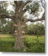 Tree Hugging Green Ecological Concept  Metal Print