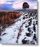 Tree In A Field  Metal Print by John Farnan
