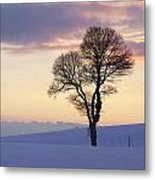 Tree In A Winter Landscape In The Evening Metal Print