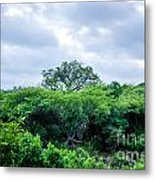 Marula Tree In African Sky Metal Print