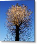 Tree In Afternoon Sunlight Metal Print