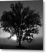 Tree In Black And White Metal Print