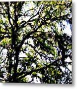 Tree In Blue Ridge Mountains Metal Print
