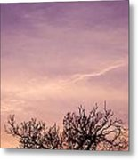 Tree In December Metal Print