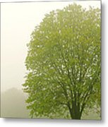 Tree In Fog Metal Print