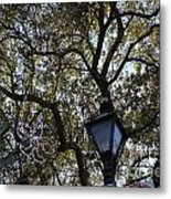Tree In French Quarter Metal Print