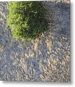 Tree In Grass From Balloon Metal Print