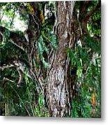 Tree In Kauai Metal Print