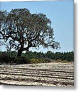 Tree In Plowed Field Metal Print