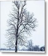 Tree In Snow Metal Print