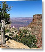 Tree In The Grand Canyon Metal Print