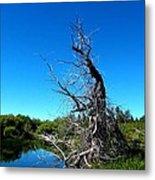 Tree In The Marsh Metal Print