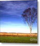 Tree In The Murnauer Moos Metal Print
