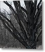 Tree In Winter Metal Print