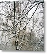 Tree Lace Metal Print by Desline Vitto