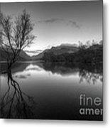 Tree Lake Metal Print
