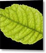 Tree Leaf Metal Print