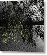 Tree Leaves Metal Print