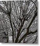 Tree Limb 4 Metal Print