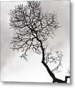Tree Limb Metal Print