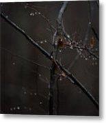 Tree Limb With Rain Drops 2 Metal Print