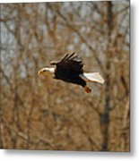 Tree Line Flight Metal Print