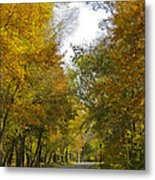 Tree Lined Park On A Fall Day Metal Print